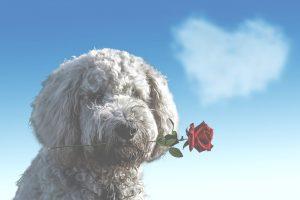 encouragment valentines day
